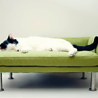 Modern Pet Bed chaise lounge chair Cat Bed / Small Dog