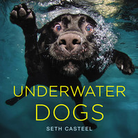 Underwater Dogs, A Book of Dogs Fetching Things Underwater by Photographer Seth Casteel