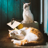 Couple cats at the sunlight Instant Digital Download Art Photography Printable, animal photography, cats couple, cat in box