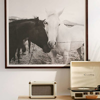 Kevin Russ Horse Cuddle Art Print   Urban Outfitters