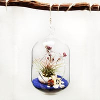 "Terrarium Glass- 6"" x 4"" bubble"