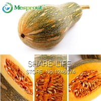 10pcs Vegetable and Fruit Seeds Honey This Pumpkin Seeds Very Sweet Bonsai Plants Seeds for Home & Garden