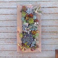 "20""x10"" Living Wall Succulent Planter Vertical Hanging Garden Art Rustic Wood Arrangement Flower Bouquet Gift"