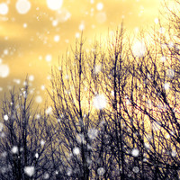 Winter photography honey gold twilight falling snow by bomobob