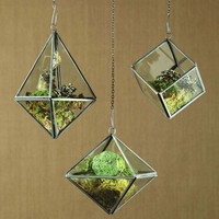 Plant & Grow Geometric Hanging Terrariums