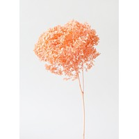 "Preserved Orange Hydrangea - 8-10"" Bloom"