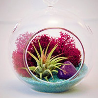 "Bliss Gardens Mini Air Plant Terrarium with 3"" Glass, Fuchsia Moss, Turquoise Sand and Purple Rock"
