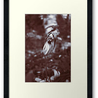 2362 Framed Prints by Erica Marie Photography | RedBubble