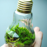 The bright idea terrarium with live ecosystem desk object
