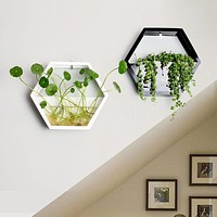Polygon wall Flowers and plants pots for soil and Hydroponic plants
