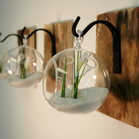 Individual Glass Globe Wall Decor each mounted to recycled wood board with wrought iron hook for  unique home decor wall decor kitchen decor