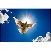 flying dove animal poster BEAUTIFUL SPIRITUAL IMAGE unique collectors 24X36