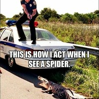 This is how I act when I see a spider.