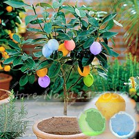 Hot Sale 30 Pcs Colorful Lemon Seed Drawf Bonsai Tree Tropical Fruit Seeds,DIY Potted Plant,High Survival Rate Edible Fruit Seed