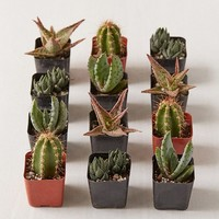 "2"" Live Assorted Hardy Plant - Set of 12 