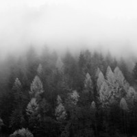Modern Nature Fine Art Photography Print - Black and White - Gift for Him for Her for Friend - About Fog