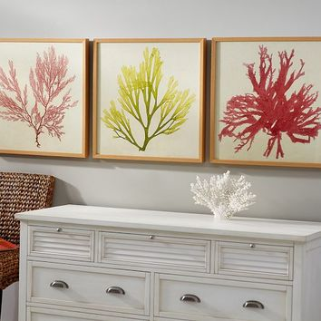 FRAMED CORAL PRINTS - CORAL