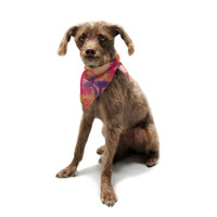 "Ebi Emporium ""Cow Parsley"" Pet Bandana"
