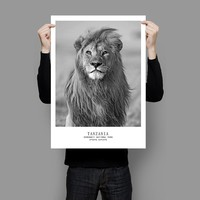 Poster Nordic Black White Animal Lion Letter Posters And Prints Canvas painting Modern Wall Art Pictures For Living Room Decor