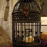 Victorian Gothic Crow in Cage, Goth Home Decor,