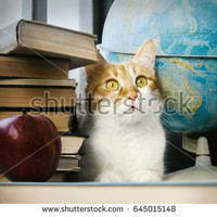 Ginger cat with old books and globe, librarian learned cat, studying cat, education