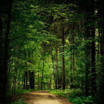 Magical Woods Photograph Woodland trees by LisaRussoPhotography