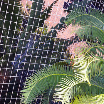 Tropical Pink and Green Palm Tree Photograph - Abstract Florida Home Decor