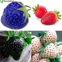 100pcs Multi Color Strawberry Seeds Black Blue Red Pineapple Strawberry Fruit Seeds Potted Plants Garden Vehetable Seeds