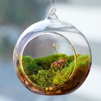 Terrarium Ball Globe Shape Clear Hanging Glass Vase