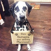 Dog in wedding sign, OUr Humans are getting married, My humans are getting married, dog in wedding ceremony, pets in wedding