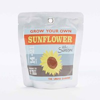Grow Your Own Sunflower - Urban Outfitters