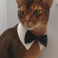 White point collar with interchangeable bow tie