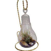 Airplant Light Bulb Terrarium With Gold Stand