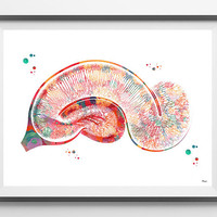 Pyramidal cells watercolor print Pyramidal Neurons of the hippocampus poster golgi neurology art print anatomy art medical art gift