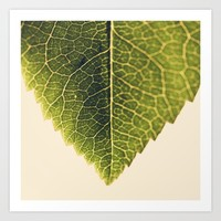 green leaf abstract Art Print by Ingrid Beddoes