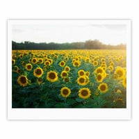 """Chelsea Victoria """"Sunflower Fields"""" Floral Photography Fine Art Gallery Print"""