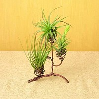 Elevated Triple Air Plant Holder - Happy Gardens