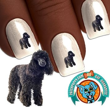 Standard Poodle Black Standing Nail Art (NOW 50% MORE FREE)