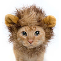 Lion Hair Cat Mane With Ears