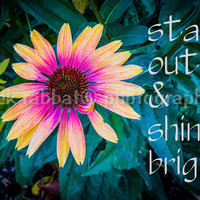 Stand Out & Shine Bright Love Yourself Flashy Echinacea Fine Art Flower Photography Instant Digital Download Pink Blue Teal Yellow